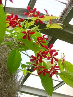 Смотреть бесплатно цветы из лент