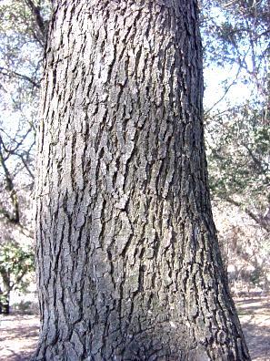 Trees 2 Deciduous Broadleaf Trees